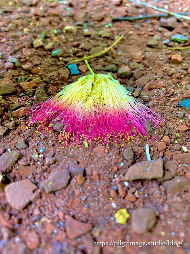 Fallen Mimosa Flower