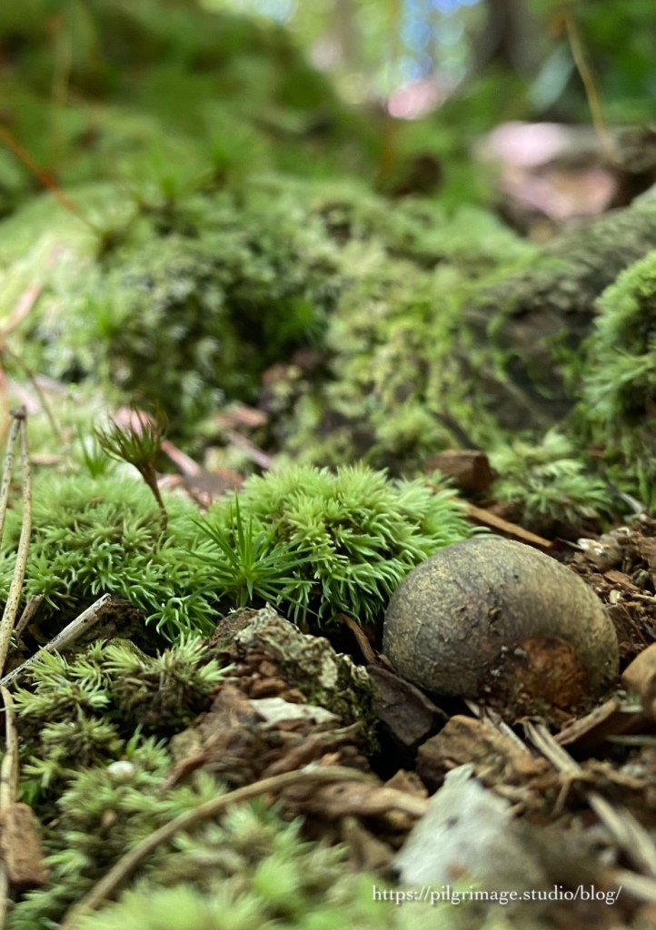 Acorn in a bed of moss