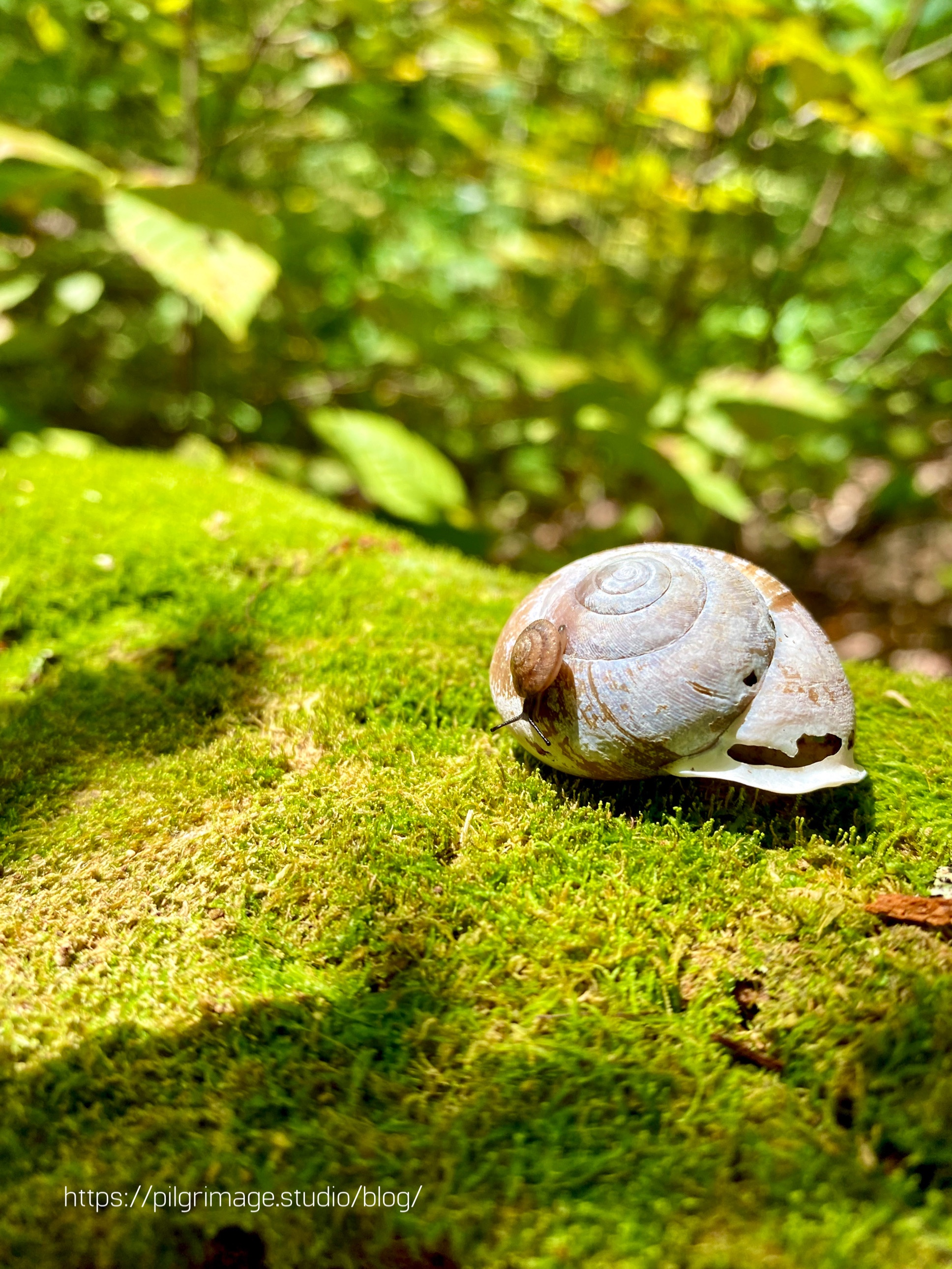Baby snail crawling on top of an empty snail shell