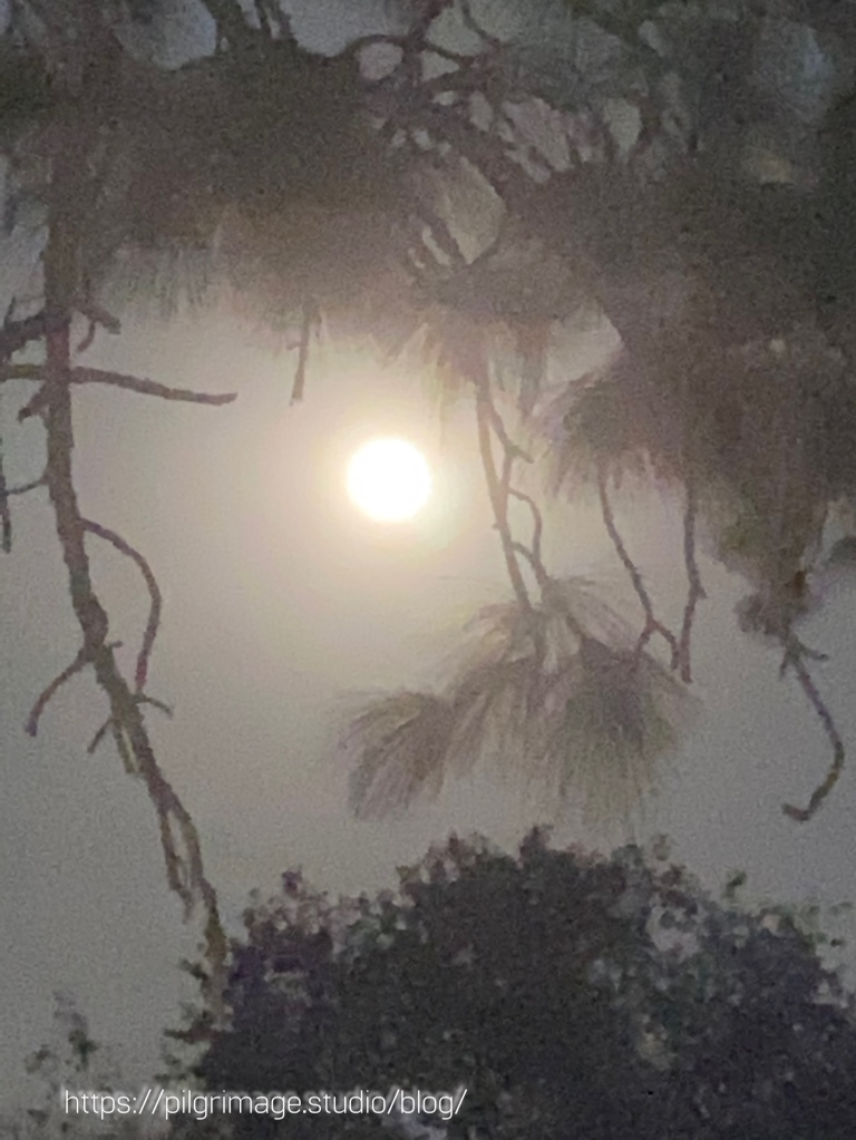 The full harvest moon between branches