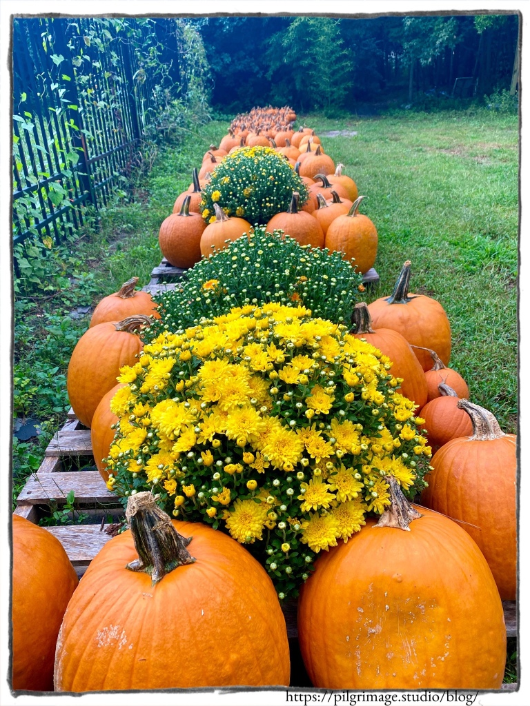Pumpkins and Mums in a row