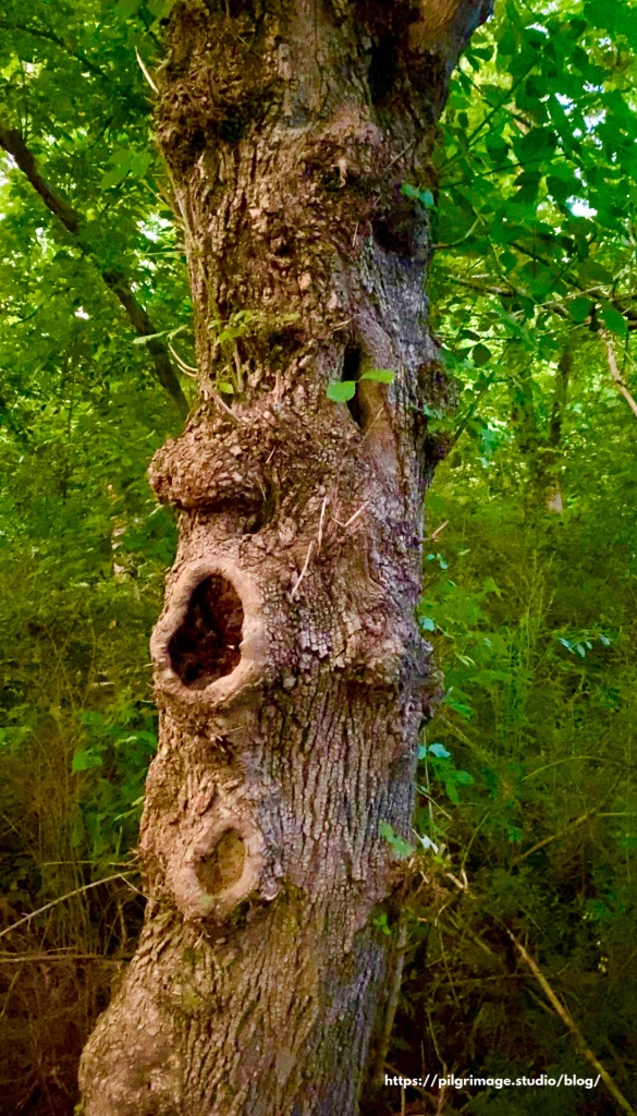 Old tree with a face