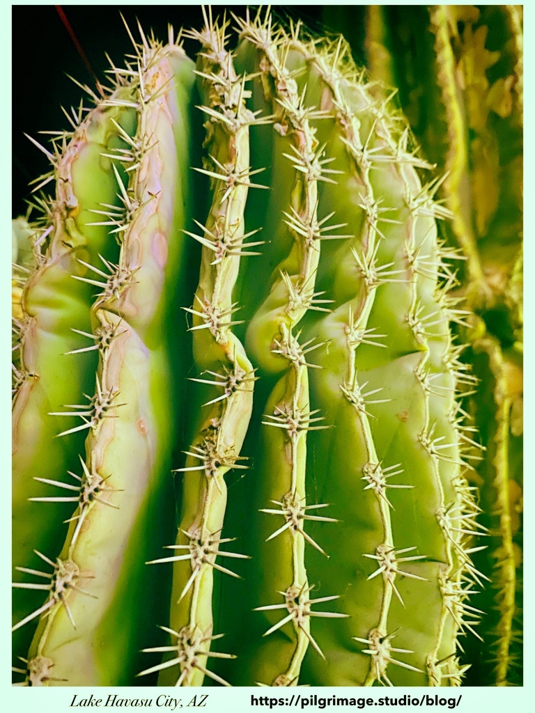 Close up of cactus spikes