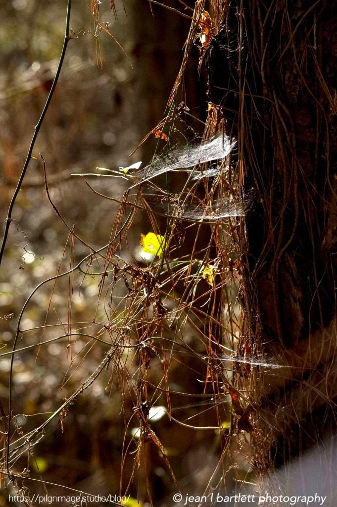Light caught in webs